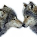 Волк Виктор